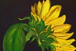 fein_sunflower